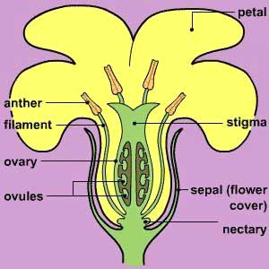 Flower biology the flower expert flowers encyclopedia flower biology ccuart Image collections