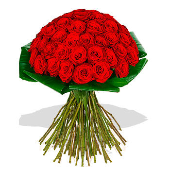Image of 50-red-roses