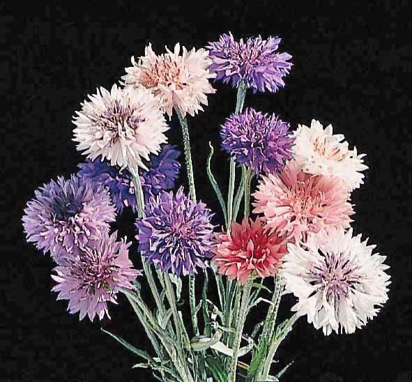 Wild flowers types of wild flowers theflowerexpert - Flowers native to greece a sea of color ...