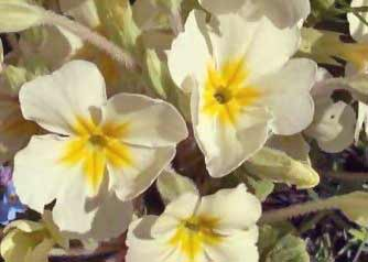 Wild flowers types of wild flowers theflowerexpert flowers grow on different plants with the male or female parts visible respectively the other partner ie stigma or anthers is hidden deep in the mightylinksfo