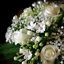 Image of Beautiful White Flowers
