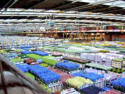 the wholesalers or retailers before the flowers finally reach consumers.