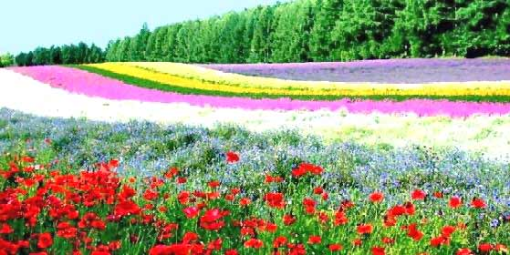 Grow flower gardens for commercial purposes growing flowers thus