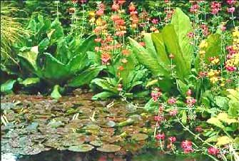 Image of Water Gardens flowers