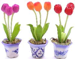 Image of Potted Tulips