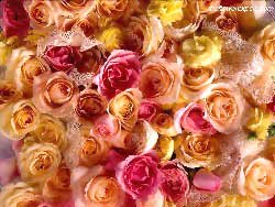 Assorted Roses Wallpaper