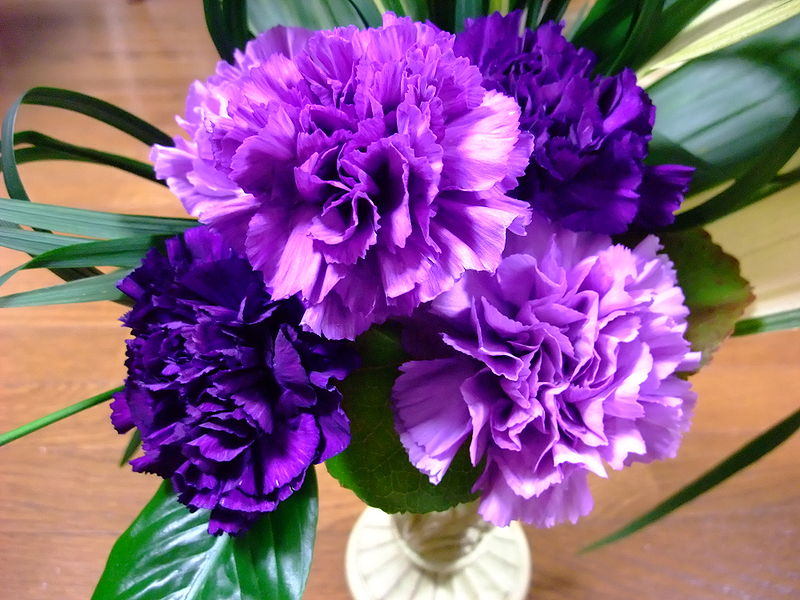 Carnations Facts Types Plant Growing And Caring Tips