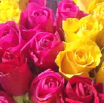 http://www.theflowerexpert.com/media/images/mostpopularflowers/roses/assorted-roses.jpg